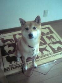 犬カイロ 健太