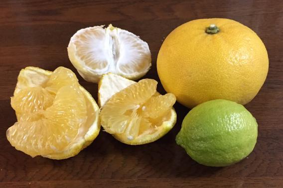 家庭菜園 甘夏 レモン