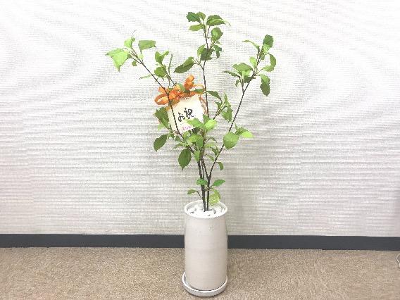 本日、湘南カイロ平塚治療室は1周年を迎えました!!