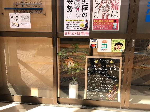 【日本猫】ブラックボードの内容が新しくなりました!