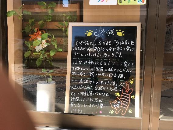 10月ブラックボード 日本猫